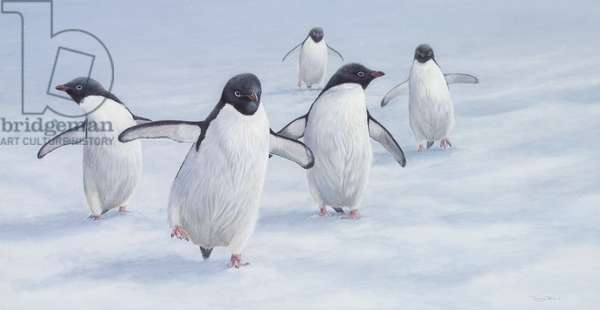 Cool Runners - Adelie Penguins, 2005 (acrylic on board)