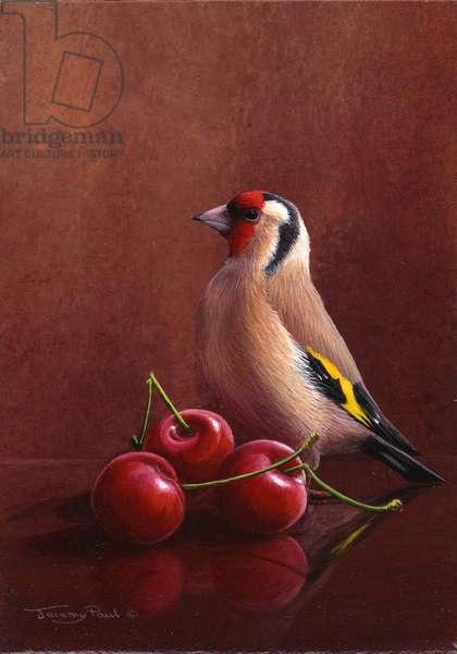 Goldfinch and cherries, 2012, acylic on board