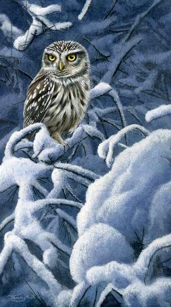 Heavy snow - little owl, 2017, acrylic on board