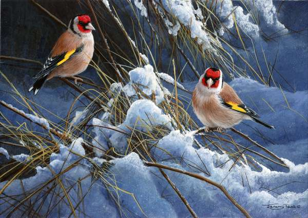 Winter goldfinches, 2013, acrylic on board