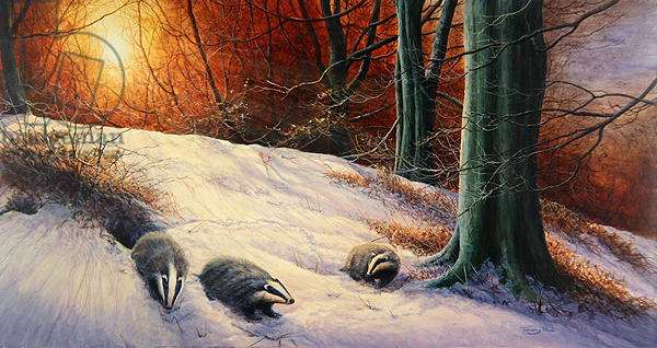 Badgers in the Snow, 1994 (acrylic on board)