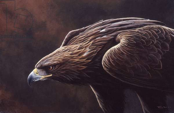 Golden eagle, 1999, acrylic on board