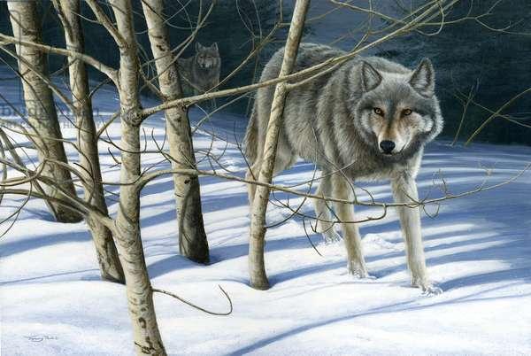 Yellowstone wolf, acrylic on board, 2016