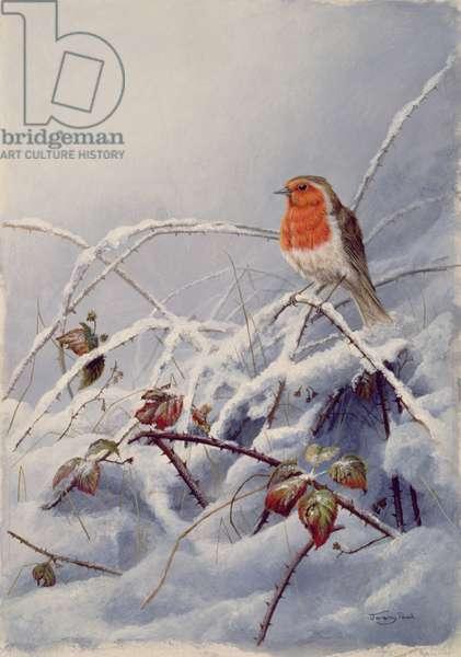 Robin, winter brambles, 1992 (acrylic on board)