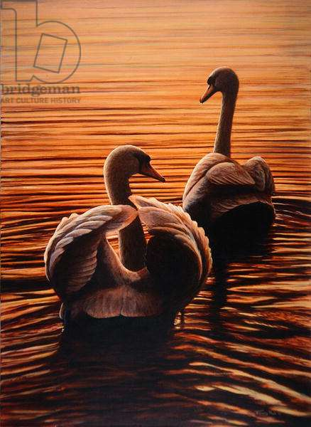 Twilight Swans, 1995 (acrylic on board)
