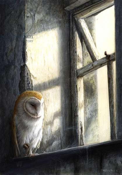 Window Light - Barn owl, 2012, acrylic on board