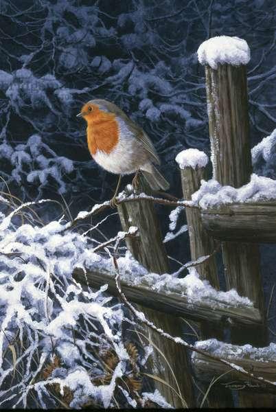 Robin, 2000 (acrylic on board)