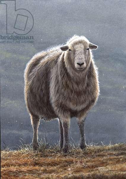 Herdwick Sheep, 2005 (acrylic on board)