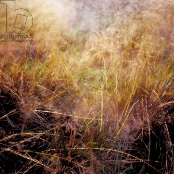 Grass 3,