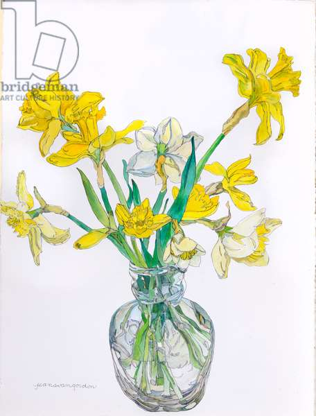 Daffodils in a Narrow Necked Vase, 2006 (w/c & ink on paper)