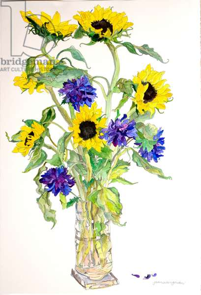 Sunflowers Asters, 1999 (w/c & ink on paper)