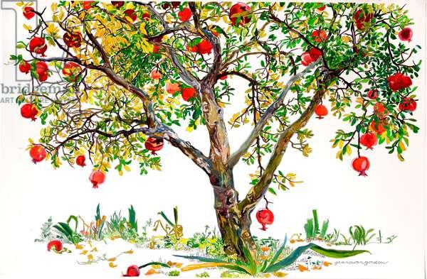 Pomegranate Tree, Monte Sereno (w/c & ink on paper)