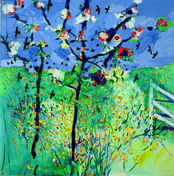 Apple Blossom in Pembrokeshire (oil on canvas)