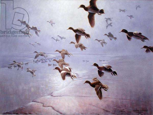 Wigeon Dropping into the Creek, 2000 (oil on canvas)