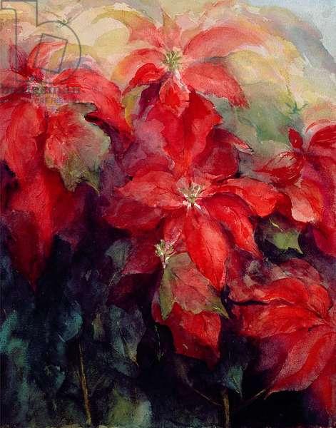 Red Poinsettias