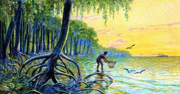 Mangrove Trees, 1934 (colour litho)