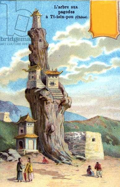 Pagoda Tree, China, 1901 (colour litho) (see also 473483)