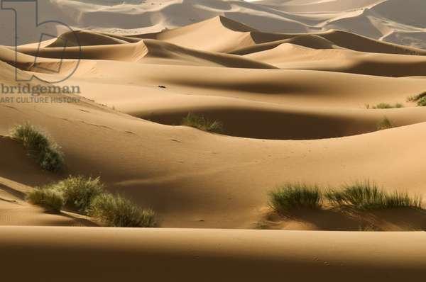 Sand Dune Desert, Erg Chebbi, Southern Morocco (photo)