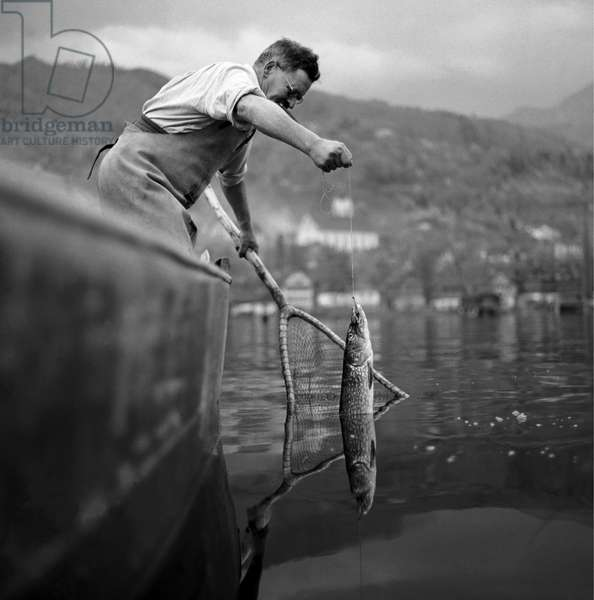 Switzerland Fischer (b/w photo)