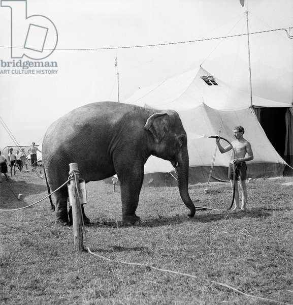 Switzerland Circus Knee, 1943 (b/w photo)