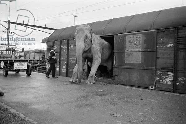 Switzerland Circus Knee, 1973 (b/w photo)