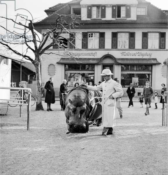 Switzerland Circus Knee, 1944 (b/w photo)