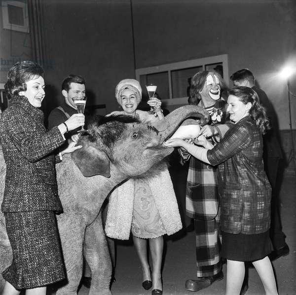 Switzerland Circus Elephants Knee, 1964 (b/w photo)