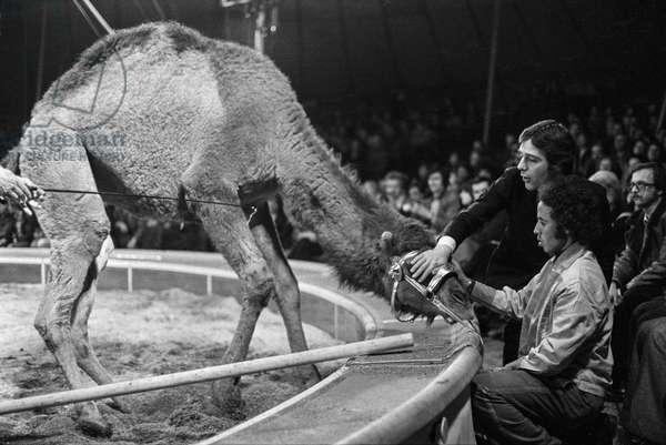 Switzerland Circus Knee, 1976 (b/w photo)