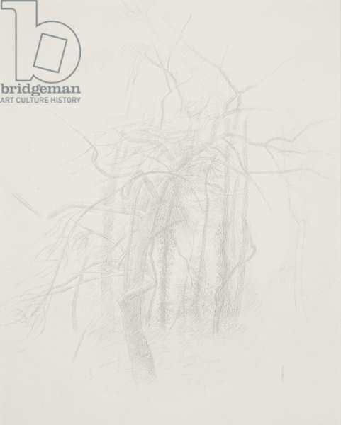 Trees, 1970 (circa) (drawing)