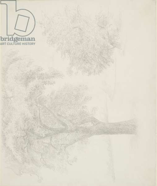 The Orchard, 1969 (July) (drawing)