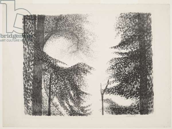 Lime Trees, Paper Hills, 1955 (circa) (print)