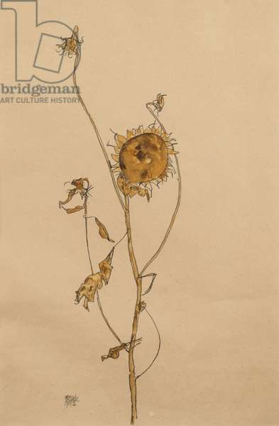 Wilted Sunflower, 1912 (gouache and pencil on paper)