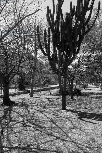 Botanical garden in Oaxaca, Mexico