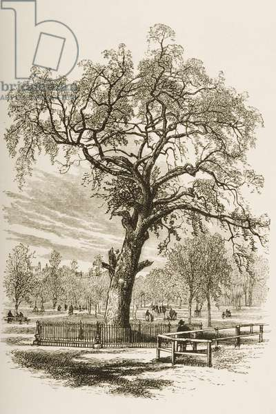 Liberty Tree, Boston Common, in c.1870, from 'American Pictures' published by the Religious Tract Society, 1876 (engraving)