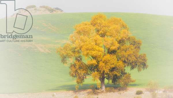 Lone tree against green hill (photo)