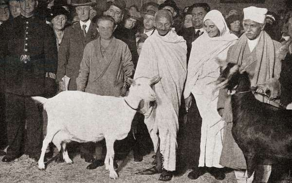 Mahatma Gandhi arrives in London, England in 1931 with his disciple, Madeleine Slade, and his two goats, from 'The Story of Twenty Five Years', published 1935 (b/w photo)