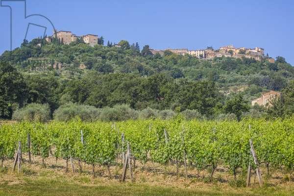 Montalcino, Tuscany, Italy (photo)