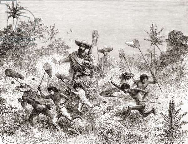 Édouard François André catching butterflies in Villavicencio, Venezuela during his botanising expedition in the foothills of the Andes in 1875-76 (engraving)
