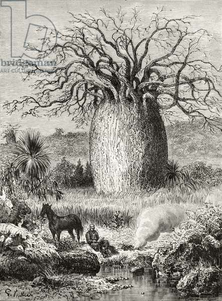 The Bottle Tree, from 'Australian Pictures' by Howard Willoughby, published by the Religious Tract Society, London, 1886 (litho)