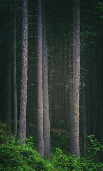Forest, northern Italy (photo)