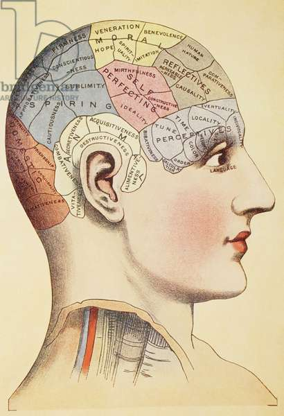 A phrenological map of the human brain, from 'Virtue's Household Physician', published in 1924 (colour litho)