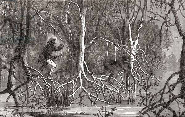 An escaped slave is pursued through a mangrove swamp by an armed overseer, 1882
