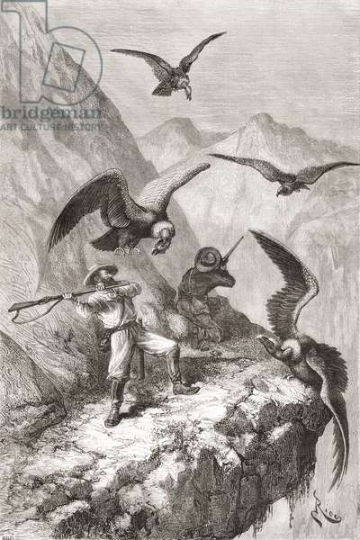 Édouard François André and companion being attacked by condors near Calacali, Pichincha Province, Ecuador, during his botanising expedition in the foothills of the Andes in 1875-76 (engraving)