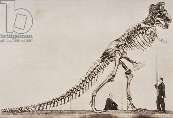 Skeleton of the Tyrannosaurus Rex, in the American Museum of Natural History, from 'The Outline of History' by H.G. Wells, Volume I, published in 1920 (photogravure)