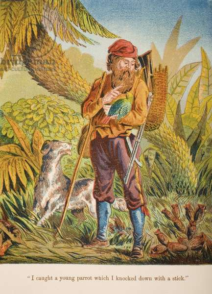 'I caught a young parrot which I knocked down with a stick.', illustration from 'Robinson Crusoe' by Daniel Defoe (1660-1731) c.1860s (chromolitho)
