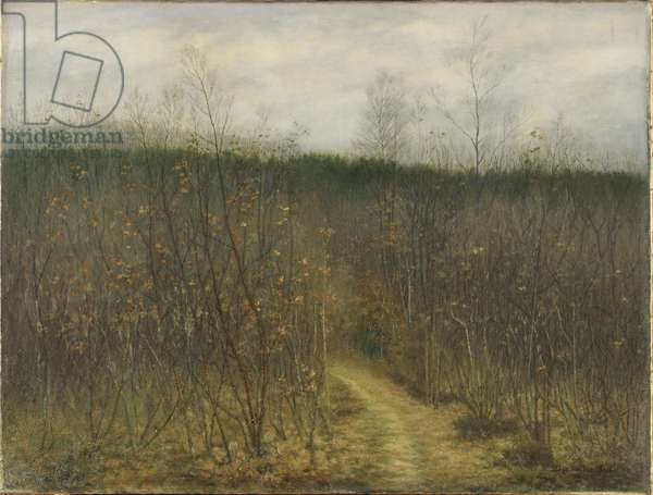 Coppice at Sint-Martens-Latem, 1898 (oil on canvas)