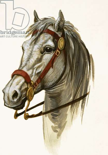 Unidentified horse