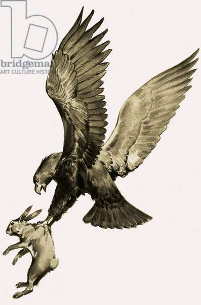 The Eagle and the Hare, from the story by Aesop