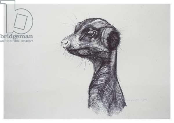 Meerkat,2016,(biro on paper)