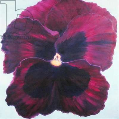 Pansy, 2004 (oil on canvas)